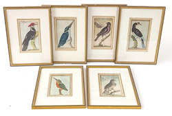 Six 18th Century German Hand Colored Bird Engravings
