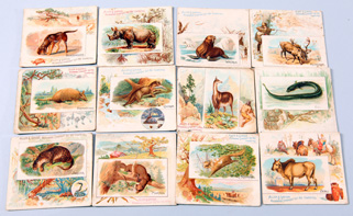 11 1888 N41 Allen & Ginter Large Format Quadrupeds Cards                                                 Scarce Non Sports set. Lot includes 11 Quadrupeds cards & 1 Fish Card