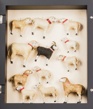Collection of Creche Lambs